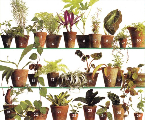 plant-selection1