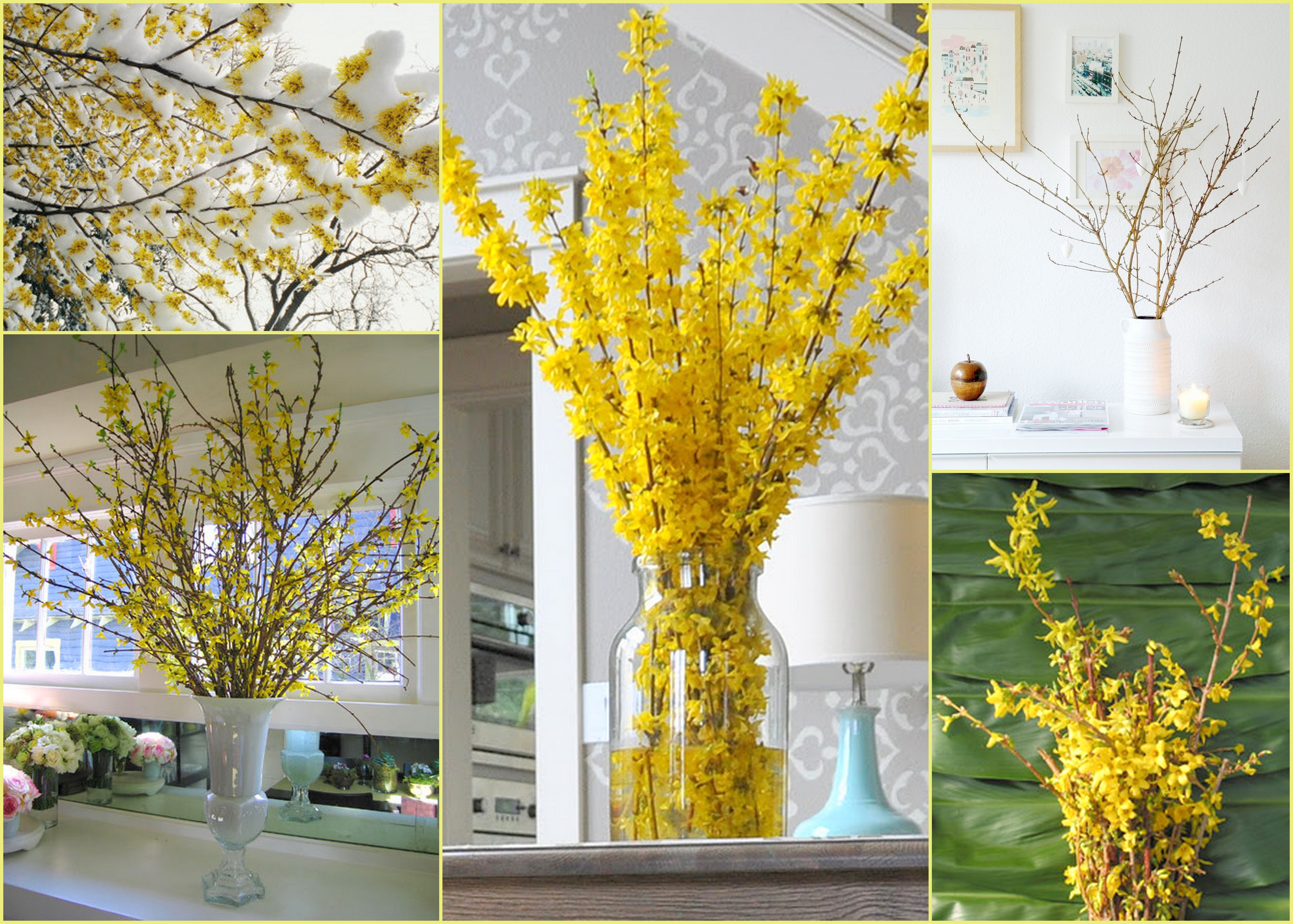 Fab Forsythia Lily And Co