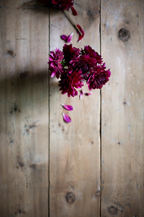 beautiful blooms at lily...